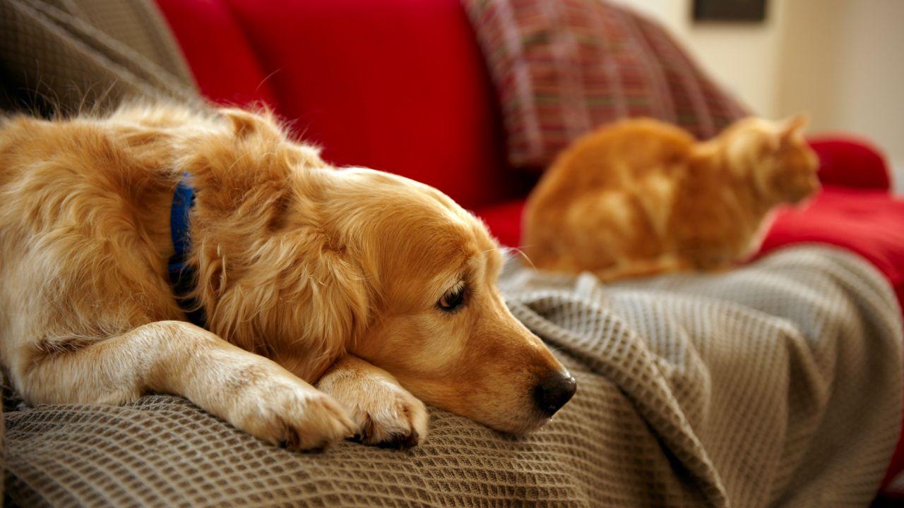 Mascotas y coronavirus: todas las claves para afrontar el virus en compañía de perros y gatos