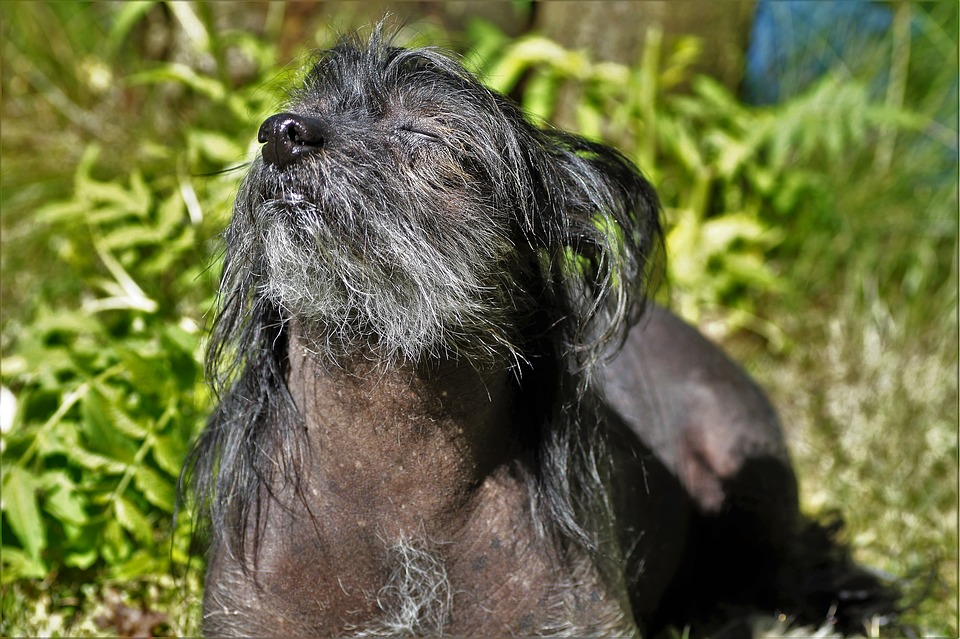 Importancia del zinc en los perros