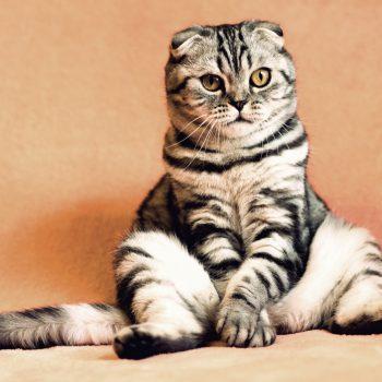 Curiosidades felinas