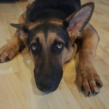 Los perros y lo sobrenatural