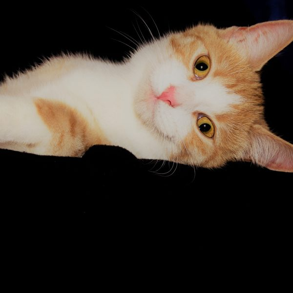 Gato amasar